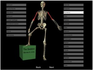 Discover Joints and Bones Online Game