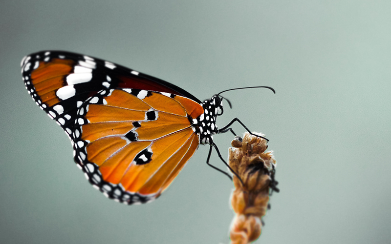 orange, black and white butterfly on a flower stem